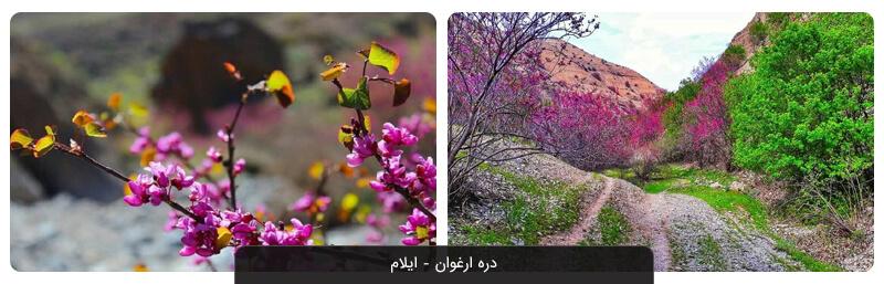دره ارغوان ایلام